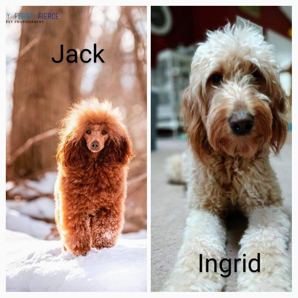 INgridJack